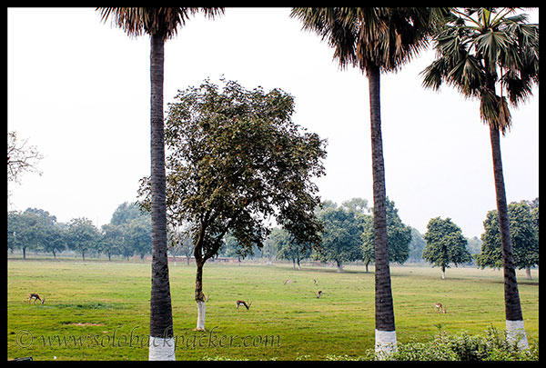 Deer grazing in the complex @ Sikandara, Agra