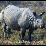 Pabitora Wildlife Sanctuary: Sighting The Great Indian One-Horn Rhinoceros