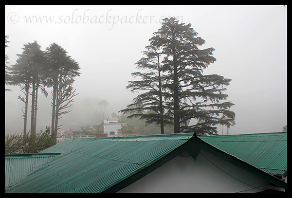 Pine Trees at GMVN Guest House