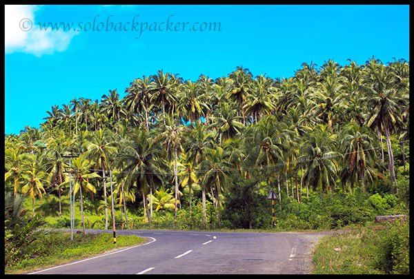 Coconut Plantation Along The Road to Wandoor