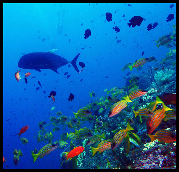 Colorful Marine Life at Dixon's Pinnacle, Havelock Island