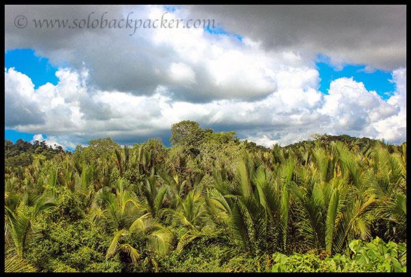 Plantation Along The Road to Wandoor