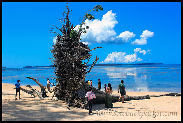 Memories of Tsunami: An Uprooted Tree