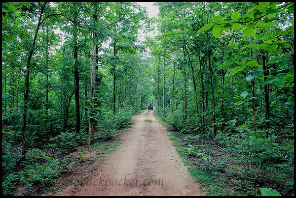 A Safari Trail Inside The Barnawapara Wildlife Sanctuary