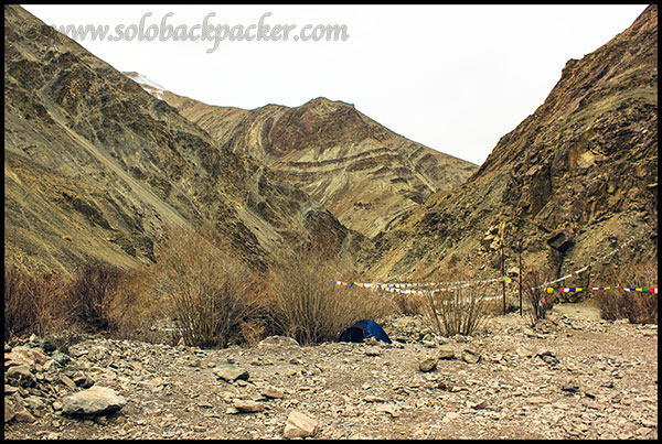 Our Tent in Hemis Park