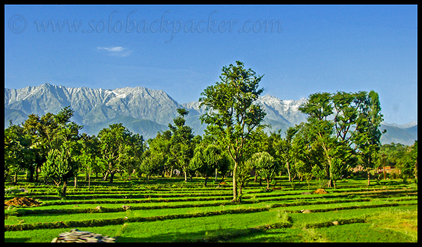 View of Dhauladhar from Kangra