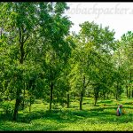 Some Beautiful Places in The Spectacular Kangra Valley