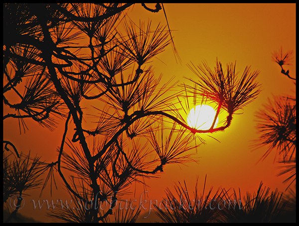 Sunset Through the Pine Trees
