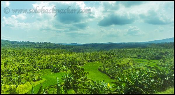 Plantations, Mainly Banana On The Way